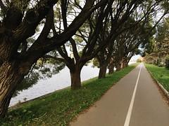 way (Alexey Tyudelekov) Tags: trees way track petersburg roller