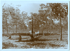 0043 Aircrash in an orchard (Boobook48) Tags: broken plane crash orchard aeroplane plantation vernacular damaged aircrash