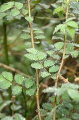 RainOnLeafs (T's PL) Tags: water nikon leafs yabbadabbadoo nikontamron d5100 nikond5100 roanokeparkrectriptohangingrockraptorobservatory