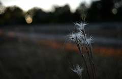 Killing time trackside (builder24car) Tags: lastlight goldenhour bokeh trackside weeds landscape nature csx hamletnorthcarolina