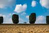 La natura fatta ad arte (Ondablv) Tags: nuvole cipressi solitario solitudine alone nature ondablv terruggia monferrato coltivati