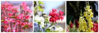 - Flowers everywhere -  (3)