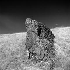 Wolf Spirit Rock (Scott Holcomb) Tags: wolfapparition zenzabronicas2 nikkorp14f200mmlens zenzabronica67mmsr582crofilter delta400profilm blackwhite 120film mediumformat 6x6 epsonperfectionv600 photoshopdigitalization