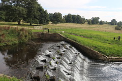IMG_4722 (alicemaryfox) Tags: yorkshire sculpture park kaws henri moore cattle sheep art discovery water bridge stately home national