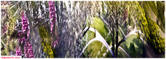 trying to catch the garden flies (DelioTO) Tags: 6x17 autaut botanical canada city closeup colours curved f175 flowers garden landscape may natparks ontario anamorphic pinhole portra spring trails