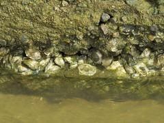 img_0096 (Ricardo Jurczyk Pinheiro) Tags: praia barradesojoo conchas guadoce