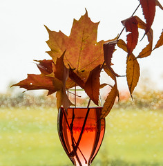 Tipsy on fall colours (Robin Penrose) Tags: backlit window bokeh treeline wineglass still fallcolours 201610 orange green red