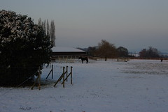 Montfort l'Amaury, Yvelines, France, Decaux, Neige, , 06/1/2013, FAF (jlfaurie) Tags: montfortlamaury decaux faf 06012013 neige nieve snow hiver invierno winter horses chevaux caballos extrieur fafpm