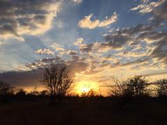 IMG_8513.jpg (carelstassen) Tags: krugerpark mpumalanga southafrica
