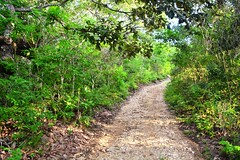 Trail in Chiapas, Mexico (Shane Adams Photography) Tags: mexican mexico trail outdoors outside nature natural nikond7100 chiapas