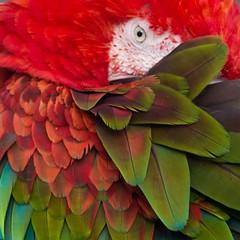Parrot Dalton 2036  DSC_6238 (D210bob) Tags: parrot dalton dsc6238 2036