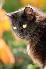 (martine_ferron) Tags: chat automne