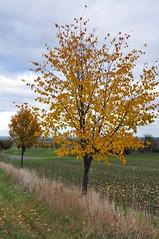 Podzim (Autumn) (roj czech) Tags: strom tree list podzim autumn pole field cloudy