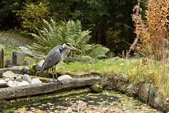 15102016-IMG_7994.jpg (thehikingzebra) Tags: stockholm sude visitepapaetmaman animaux
