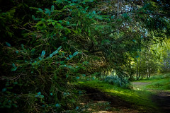 firry (pamelaadam) Tags: tomintoul moray scotland autumn september 2016 stmikes work youthwork ellonparishchurch churchofscotland digital fotolog thebiggestgroup tree plant