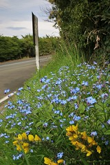 27/116 Roadside (PalmyLisa) Tags: 116 116in2016 flowers flower roadside blue yellow gorse forgetmenot