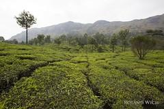 Munnar (Rolandito.) Tags: south southern india kerala munnar tea plantation plantations