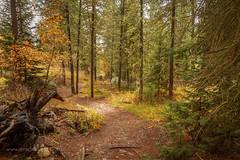 The nature walk trail (scepdoll) Tags: phelpslake grandtetonnationalpark wyoming rockefellercentre moosewilsonroad aurancesrockefellerpreserve