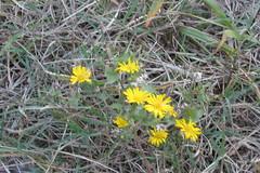 IMG_0242 (hammonton_garden) Tags: 2016 communitygarden fall hammonton southjersey nj gardenstate