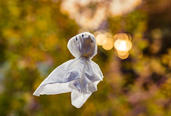 he flies through the air with the greatest of ease - 292/366 (auntneecey) Tags: ghost fall leaves bokeh 366the2016edition 3662016 day292366 18oct16