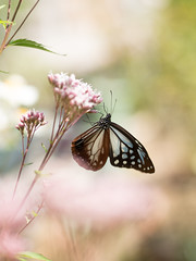 (Polotaro) Tags: mzuikodigital45mmf18 butterfly insect bug nature olympus epm2 pen zuiko           garden 10 flower