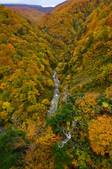 201610173882 (Gansan00) Tags: sony ilce7rm2 japan aomori hakkoda landscape      10