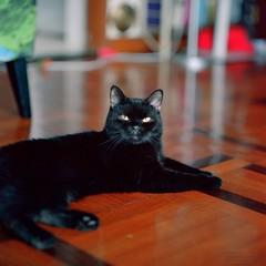 160916_009 (cybercynic) Tags: 6x6 arax domesticcats ciccio