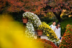 Happy moment with those young couple on a date (naruo0720) Tags: autumn autumncolors chrysanth chrysanthemum macro bokeh