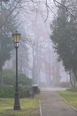 lonely lamppost... (green_lover) Tags: lamppost lamp mist fog path park trees żyrardów poland autumn fall seasons vanishingpoint