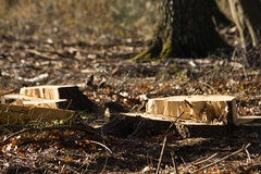 ckuchem-7206 (christine_kuchem) Tags: wald abholzung baum baumstmme bume einschlag fichten holzeinschlag holzwirtschaft waldwirtschaft