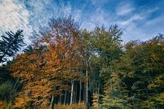Multicolored leaves of trees (tomaskriz1) Tags: multicolored foliage serene plant outdoor sky blue road wonderful beautiful beauty colorful forest grass green landscape natural nature outdoors rural scene season tree trees moravian czech orange yellow leaves leave autumn