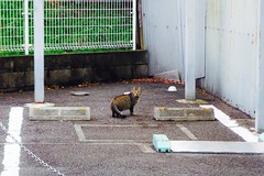 Today's Cat@2016-12-04 (masatsu) Tags: cat thebiggestgroupwithonlycats catspotting pentax mx1