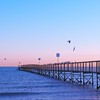 Rimini Winter Sunrise - 5 - boardwalk with seagulls (franz_brocchi) Tags: boardwalk awakening goodmorning birds seagull shore blue colors fujix20 fujifilmxseries sunrise light pier rimini italy rivieraromagnola adriaticsea dreamscape sea