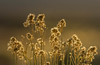 Lit by the Sun.jpg (Eye of G Photography) Tags: california monolake monolaketrip sunsetsunrise sunset northamerica bushes tufa macro usa sierramountians places skyclouds
