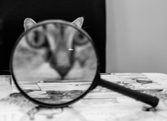 Cat on the case (Cagey75) Tags: xt1 bw 27mm fuji fujinon cat magnifyingglass