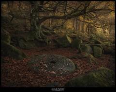 Darkest forest (www.s999.co.uk) Tags: darkest forest peak district jakubpyrdek wwws999couk studio999 studio999travel nature uk 90s sanches90s light dark landscape photography s999 favoritess999couk