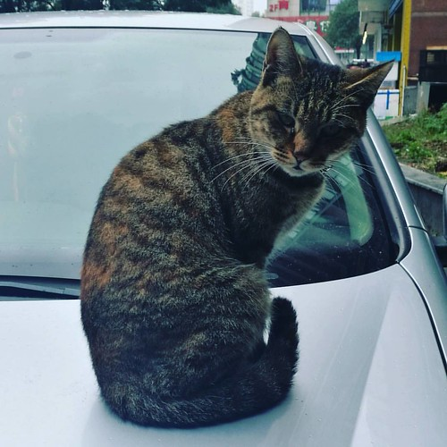 Met a cool cat...