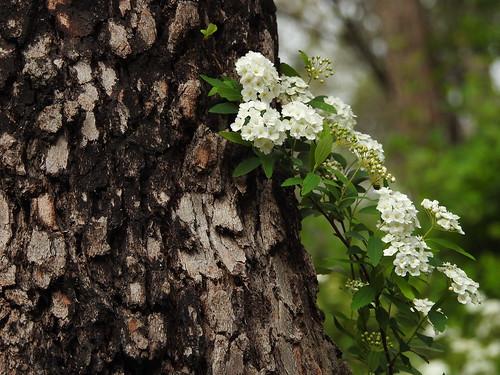 Araluen Botanical Park in spring
