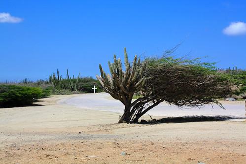 Aruba wind
