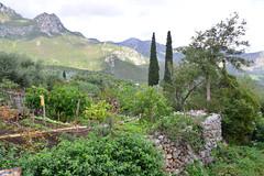 Gardens and Cypresses (RobW_) Tags: gardens cypresses vrissi kyparissi lakonia peloponnese greece saturday 12nov2016 november 2016