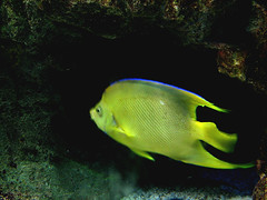 sandbucket aquarium adventure (TynonUser) Tags: aquarium camden new jersey fish animals