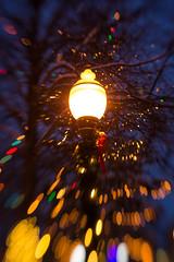 Christmas lights in Bronson Park (bill.d) Tags: light lighted fall night lensbabysweet50 winter kalamazoocounty kalamazoo lensbaby decoration bronsonpark autumn snow christmas holiday michigan unitedstates us