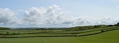 Ayrshire, Scotland. Green Pastures, Silver Clouds. (Phineas Redux) Tags: ayrshirescotland ayrshire scotland scottishlandscape