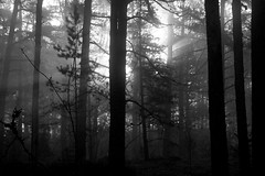 Early morning forest, Dragsfjrd, Finland, October 2016 (Juha Riissanen) Tags: suomi finland forest morning bw mist trees sun kemi kimit dragsfjrd