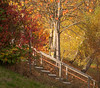 Dunsford Autumn 1 (chris-parker) Tags: river teign devon steps bridge dunsford stepping stones village autumn