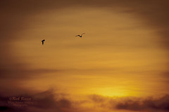 Flying towards  Dawn (White Balance Imaging Photography) Tags: beachocean nature norfolk oceanview places seasons sunrise virginia weather winter