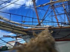 Welcome on board! Ab morgen startet die #hansesail in #Rostock und da solltet ihr die ein oder andere #ausfahrt und #Party nicht verpassen! Oder nutzt die geile Kulisse fr euer #hansesailfie ! #MVnow #aufnachmv #hafen #schiffe #stadthafen #ships #traditi (mvnow) Tags: instagramapp square squareformat iphoneography uploaded:by=instagram hansesail hanse sail harbour sailing sailingship ship boat segelschoner yacht hafen stadthafen rostock mecklenburgvorpommern schiffe hafengeburtstag seil anker kaikante anlegen