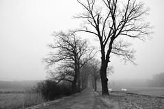 paths and roads (JoannaRB2009) Tags: path road alley avenue oak oaks tree trees bw blackandwhite winter autumn fall frost nature landscape view dolnyśląsk dolinabaryczy mist fog misty foggy polska poland