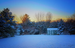 When cold and warm collide (DHaug) Tags: yard morning greely ottawa sunrise shed pawprints snow cold goldenlight aube dawn fujifilm xt2 xf23mmf14r explore explored