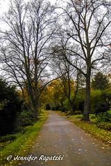 Long way (Bernsteindrache7) Tags: autumn sky dsseldorf color tree flora fauna garden germany heaven himmel nrw outdoor landscape park panasonic lumix
